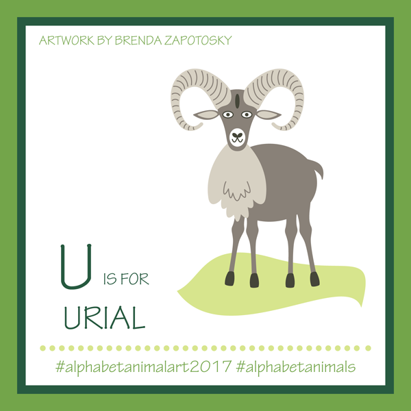 U is for Urial by Brenda Zapotosky